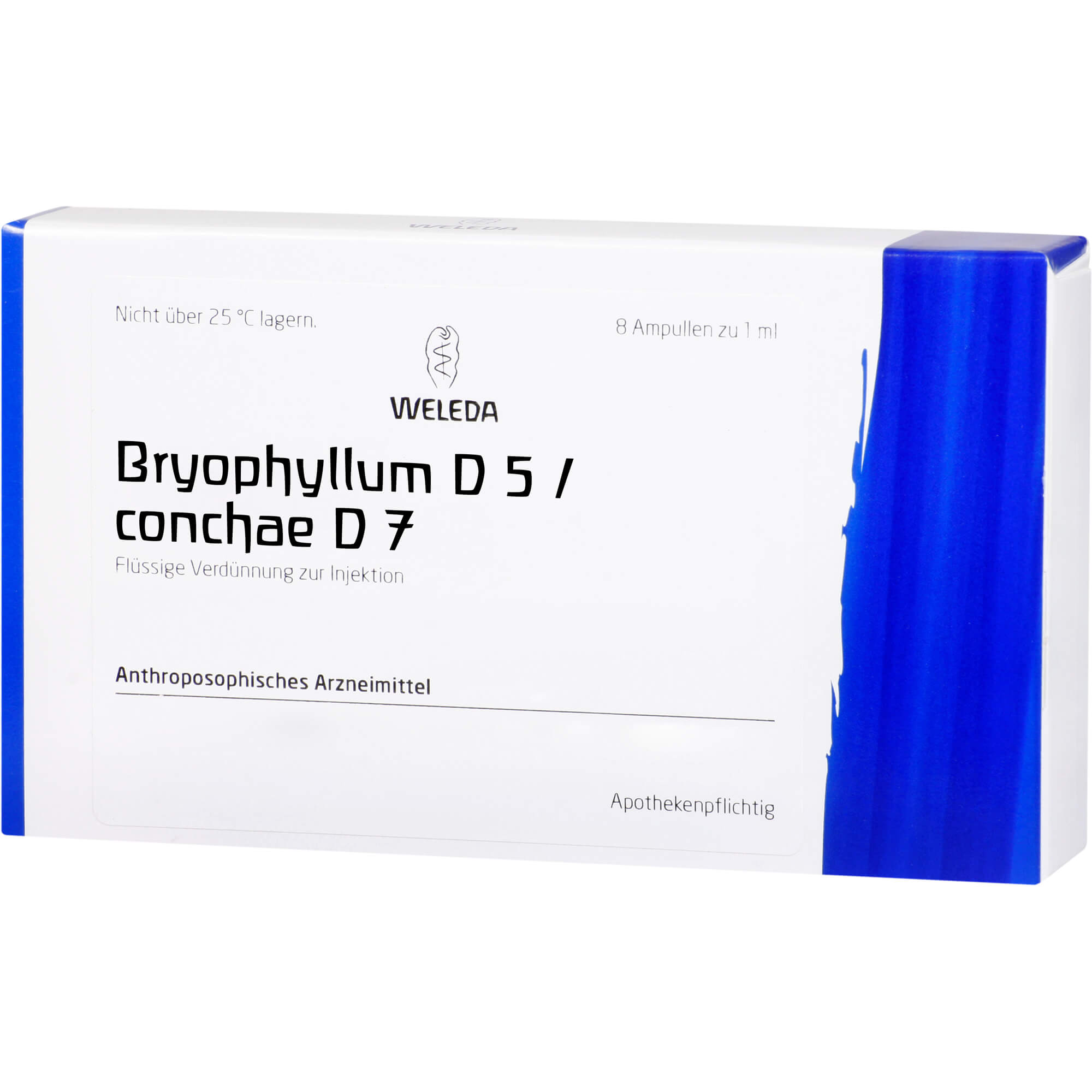 Bryophyllum D5/Conchae D7 aa